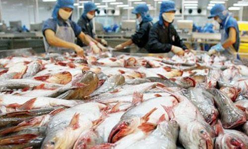 Hẹp cửa vào Mỹ, cá tra Việt đi đâu