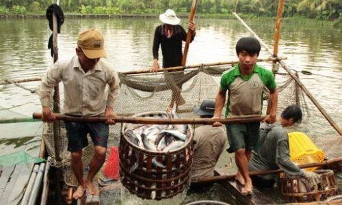 Tôm, cá được giá nhờ xuất khẩu tốt
