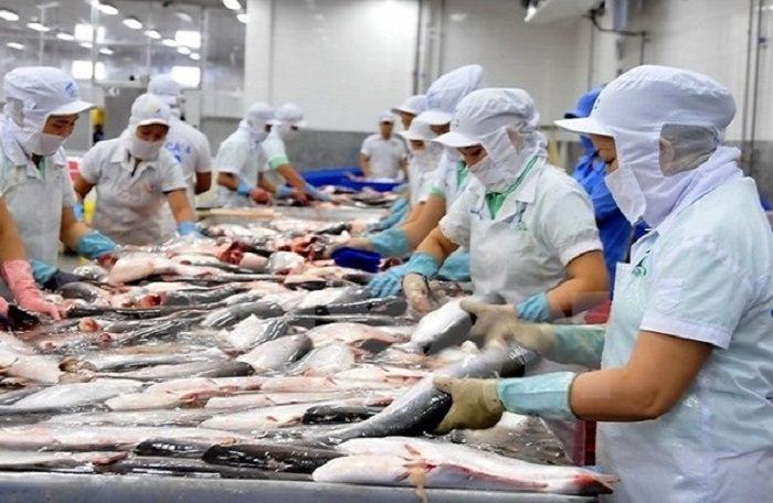 Bị áp thuế chống bán phá giá cao nhất lịch sử: Cá tra Việt Nam 'hết đường' sang Mỹ?