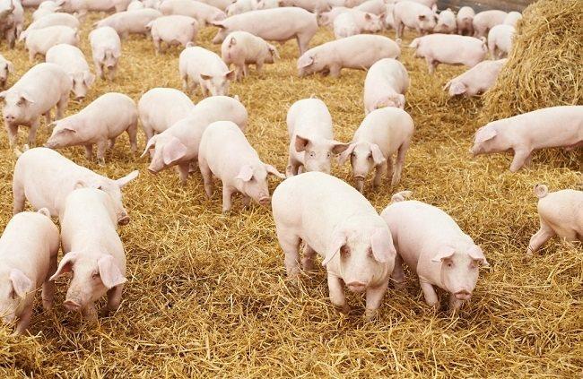 Giá nông sản, thực phẩm hôm nay (13/4): Giá lợn chạm ngưỡng 40.000 đồng