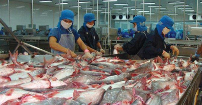 Giá cá tra tăng kỷ lục, doanh nghiệp lo khó cạnh tranh