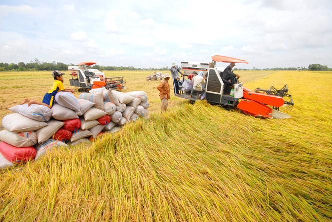 Vì sao xuất khẩu gạo sang Trung Quốc giảm mạnh?