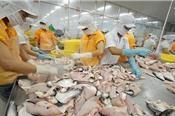 Ngành cá tra đang thiếu hụt nguồn cung trầm trọng