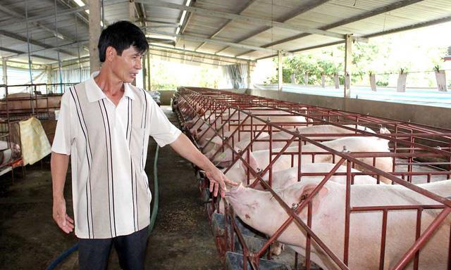 """Lợn hơi tăng giá, ngành chăn nuôi """"hồi hộp"""""""