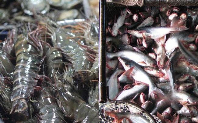 Xuất khẩu giảm, cá tra Việt vẫn được giá tại châu Âu