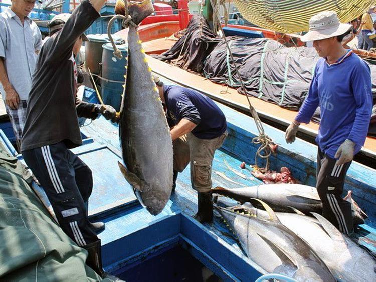 Cá ngừ Việt Nam được thị trường Canada ưa chuộng