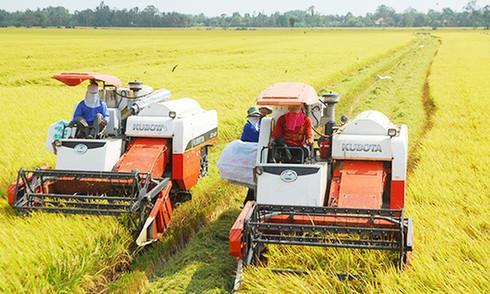 Nông sản mất giá vì thiếu chuỗi giá trị